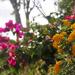 GardenView012